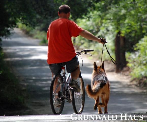 german shepherds boston