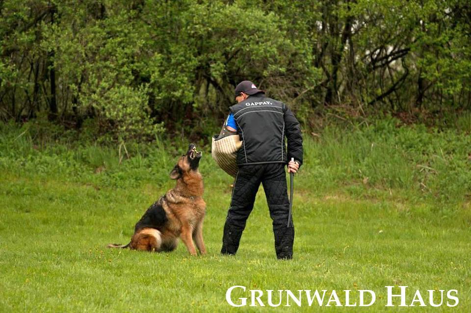 german shepherds new england