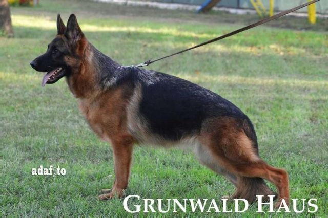 german shepherds rhode island